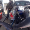 Florida Fisherman Catches 11-Foot, 805-Pound Shark on Shores of Gulf