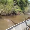Brazilian Men Find Giant Anaconda Snake In River [Video]