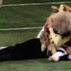 Atlanta Falcons Mascot Tackles Bucs' Fan Dressed Like a Pirate [Video]