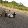 "Skate Bro Smashes Head Off Pavement, Proclaims, ""I Love Helmets!"" [Video]"