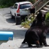 Watch Two Black Bears Fight on the Streets of New Jersey [Video]
