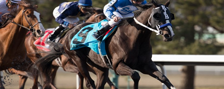 Horse Racing: Top 10 Contender For This Years Triple Crown