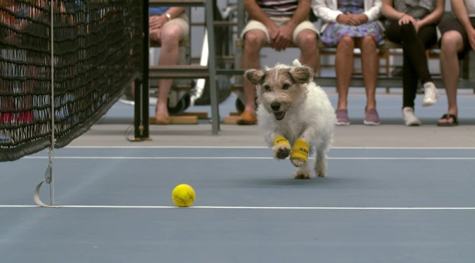 Using Dogs as Ball Boys Will Revolutionize Tennis [Video]
