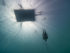 william-trubridge-free-diving-record